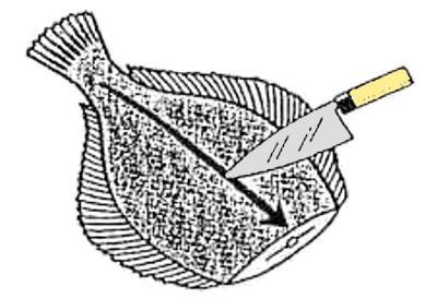 魚のさばき方 五枚おろし①