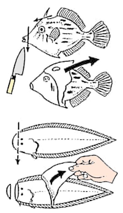 魚のさばき方 皮引きと骨切り②