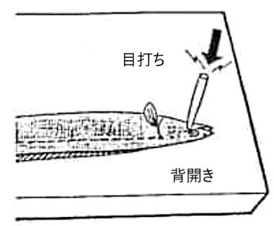 魚のさばき方 長物の開き①