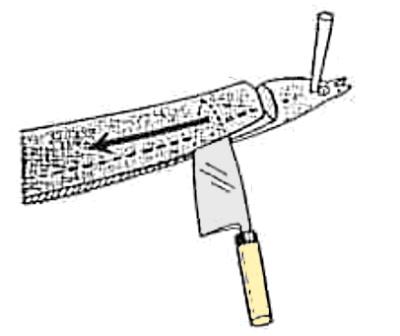 魚のさばき方 長物の開き②