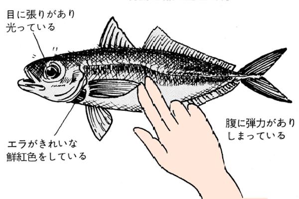 魚の鮮度を見分けるポイント