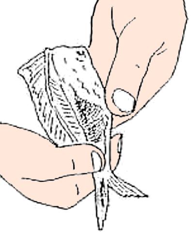 魚のさばき方 手開き③
