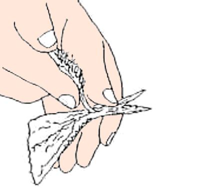 魚のさばき方 手開き④