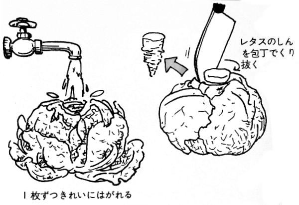 レタスのじょうずな洗い方と水切りの方法